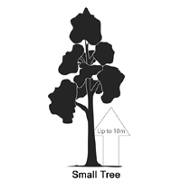 Large image of plant